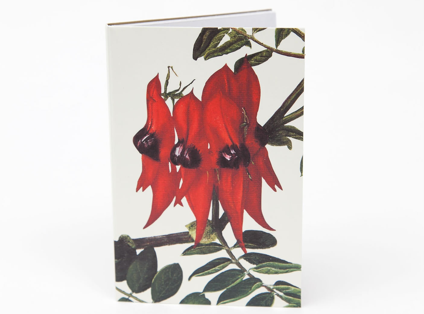 bush-gems-notepad-sturt-pea-1
