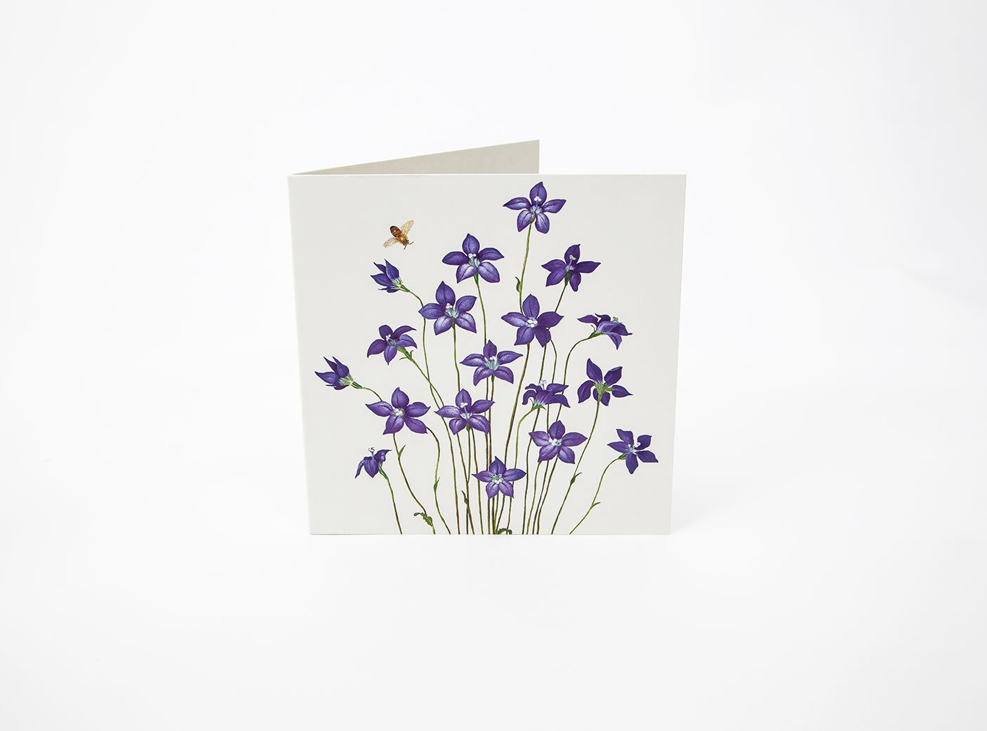 Bluebell - Floral Emblem of ACT