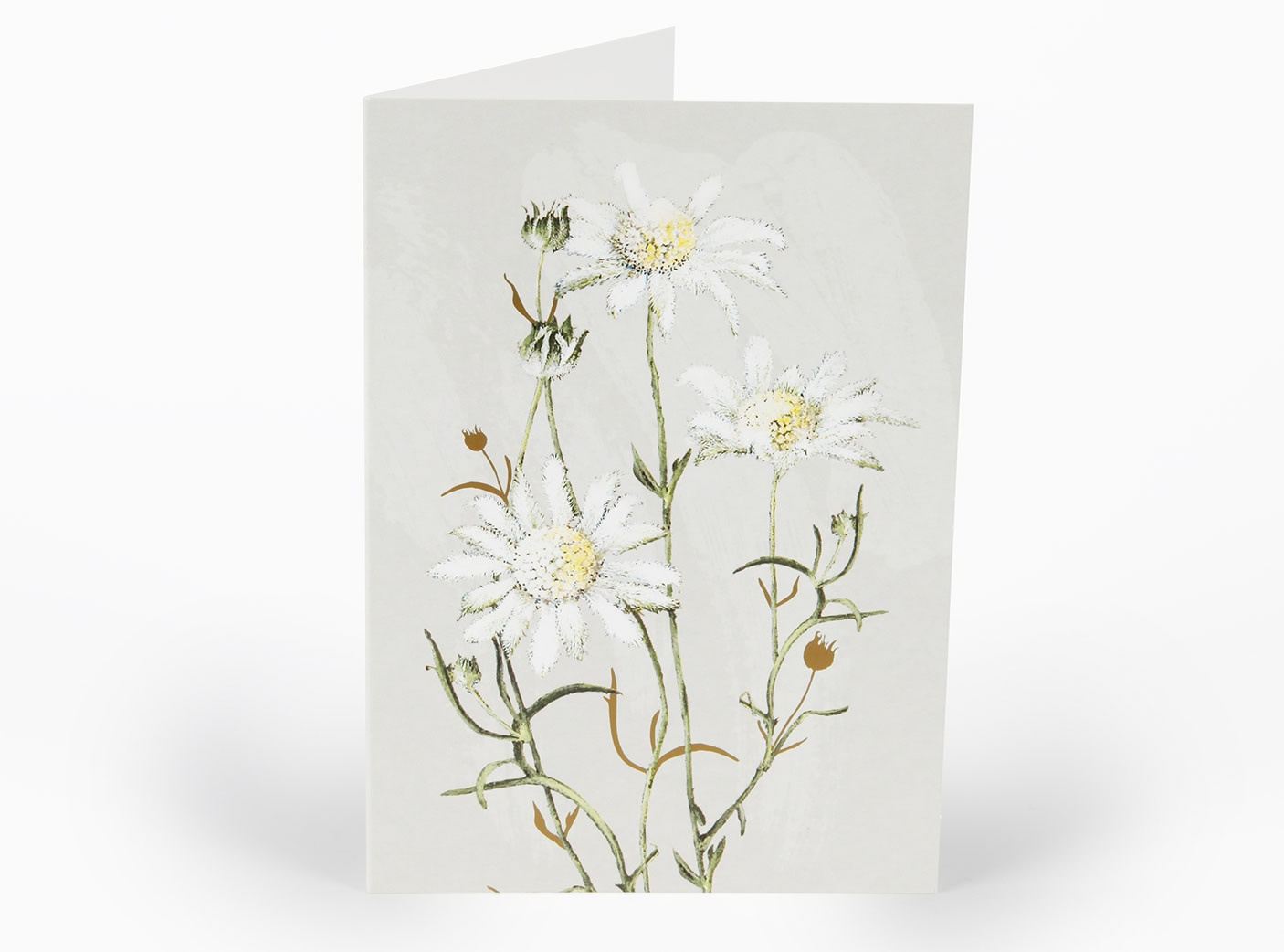 white-collection-cards-flannel-flower_58397734