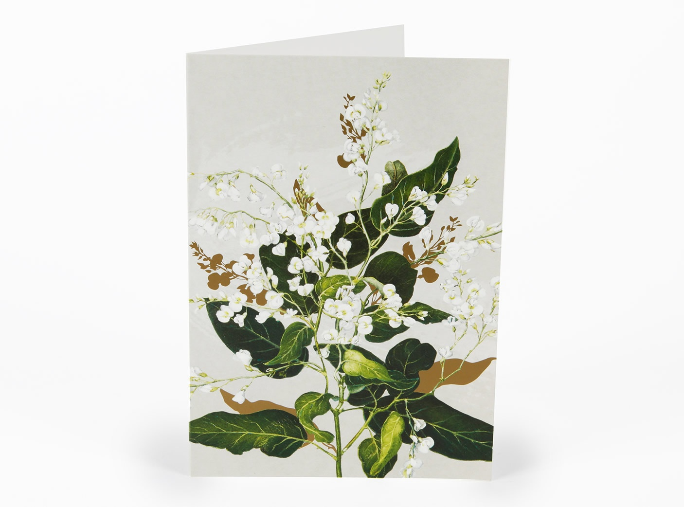 white-collection-cards-hardenbergia