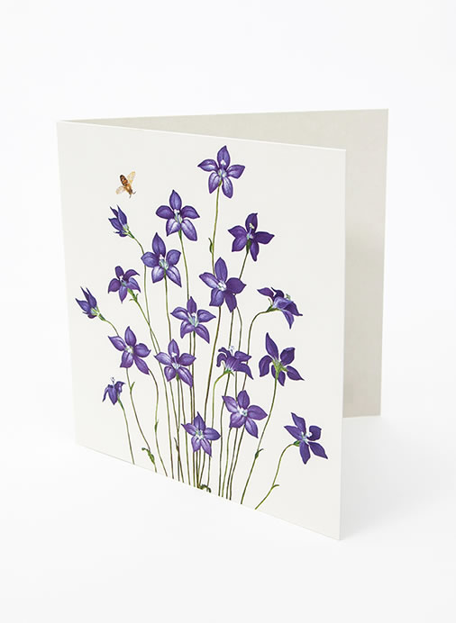 Floral Emblems Art Card - Royal Bluebell (ACT)