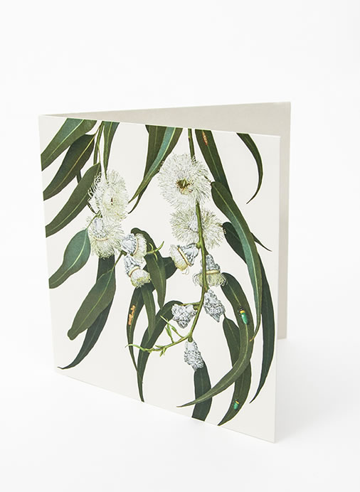 Floral Emblems Art Card - Blue Gum (TAS)