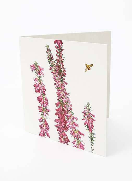 Floral Emblems Art Card - Common Heath (VIC)