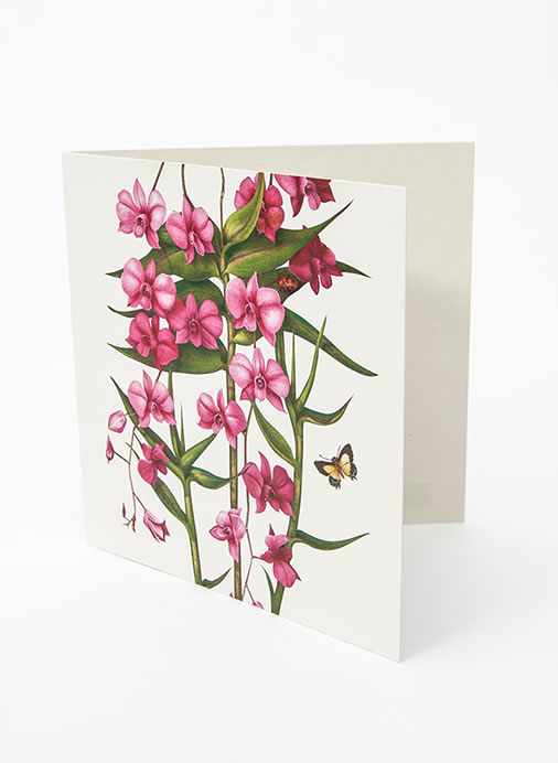 Floral Emblems Art Card - Cooktown Orchid (QLD)
