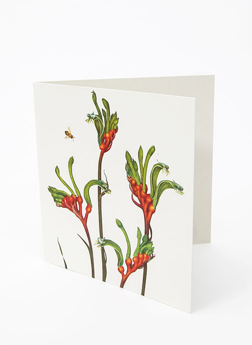 Floral Emblems Art Card - Red & Green Kangaroo Paw (WA)