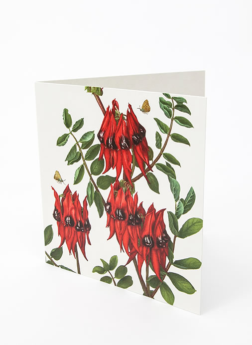 Floral Emblems Art Card - Sturt Pea (SA)