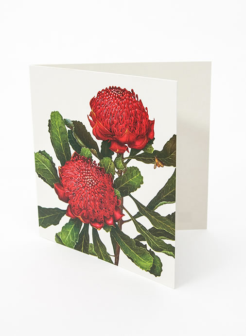 Floral Emblems Art Card - Waratah (NSW)
