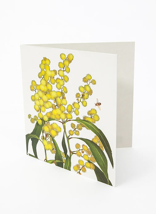 Floral Emblems Art Card - Golden Wattle (Australia)