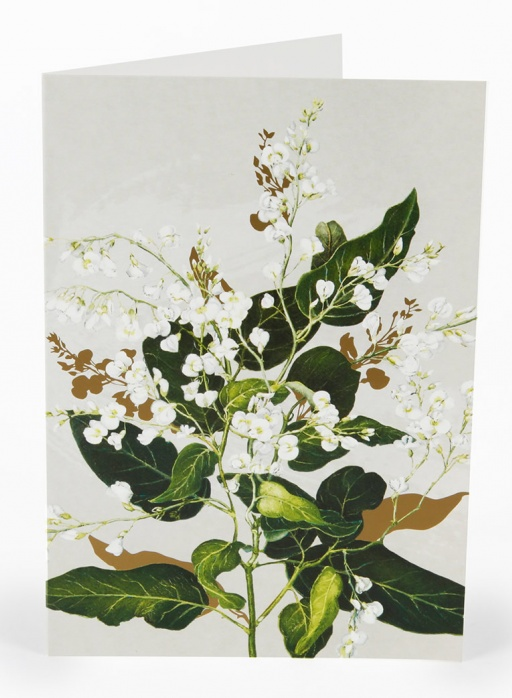 White Collection Greeting Card - Hardenbergia