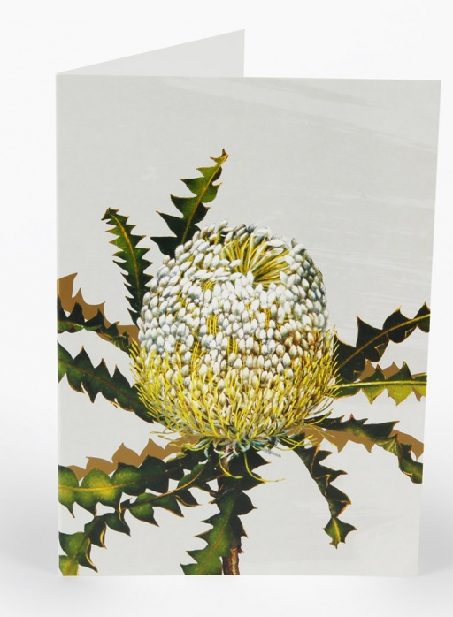 White Collection Greeting Card - Showy Banksia