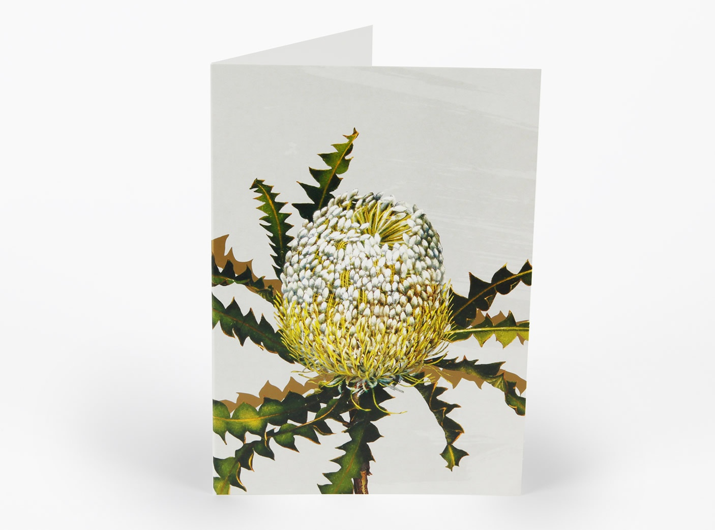 white-collection-cards-showy-banksia_294534684
