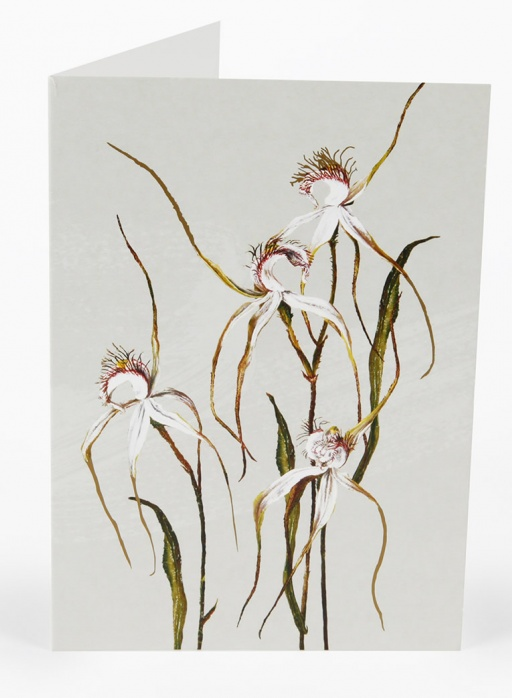 white-collection-cards-spider-orchid_1596943351